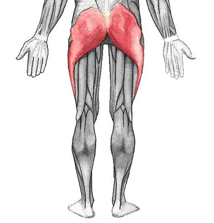 gluteal-muscle-and-ITB