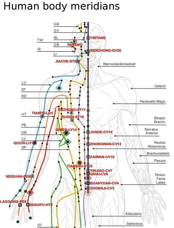 acupuncture meridians upper body